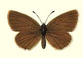 Taf. 13 Fig. 3d