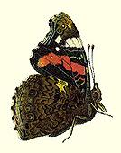 Taf. 7 Fig. 1d